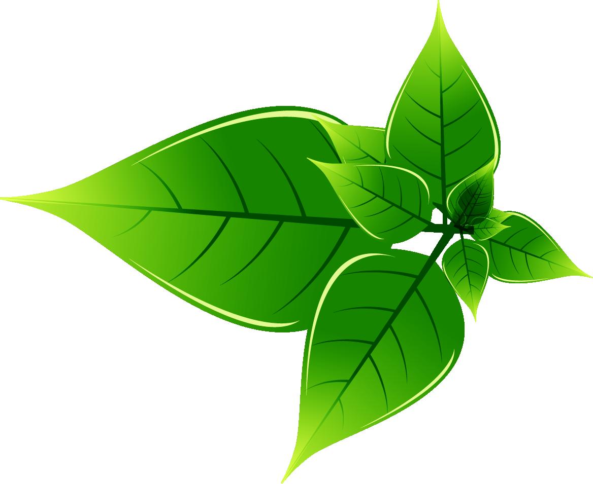 Zelené čistící prostředky šetří a jsou velmi účinné
